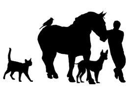 Newsletter de Techniques d'élevage - Février 2015