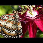 Jardin des Papillons vivants de Hunawihr