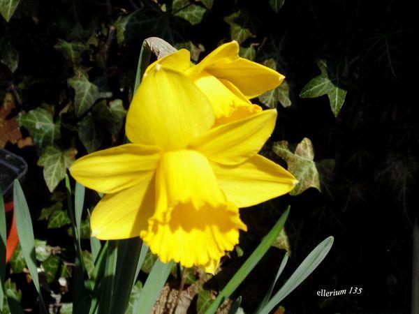 Mes fleurs du printemps