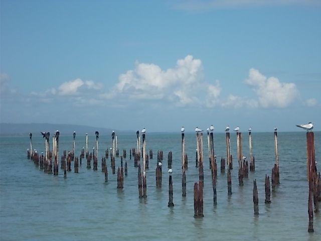 Tortuguero....Puerto Limon... Cahuita..Manzanillo....coté caraibe...