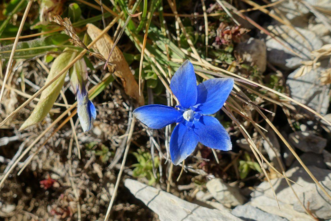 J2 : dernière floraison