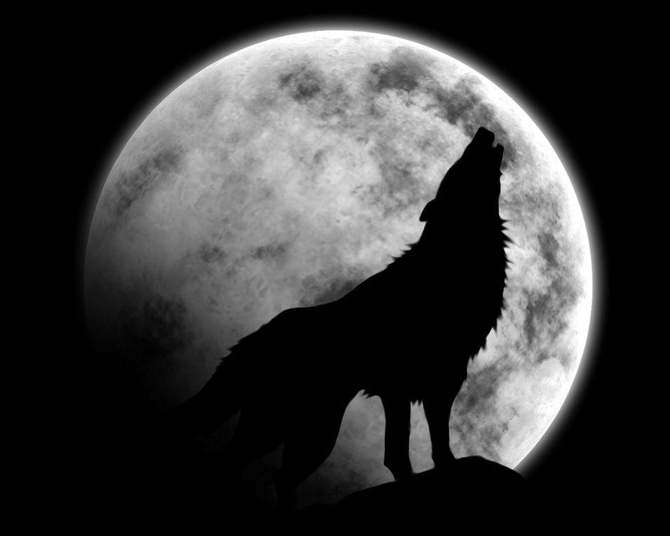 * Animal Terrestre: Loup