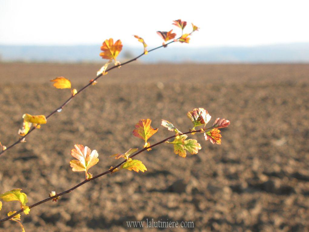 Toutes les créations de 2012 - Retrouvez-les pour les envoyer sur : http://www.i-services.com/membres/ecards/ecards.php?uid=158212&sid=105005 ou sur : http://la-lutiniere.aminus3.com/