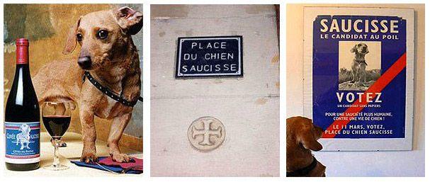 SAUCISSE, LE TECKEL JOURNALISTE (1998-2014)