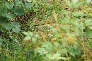Une bécassine dans le jardin