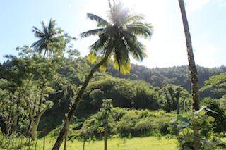La  belle vie à  Tahiti.