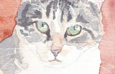 Aquarelles de chats