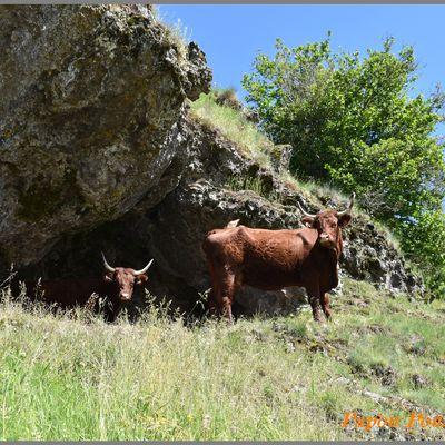 Balade autour du Puy Mary