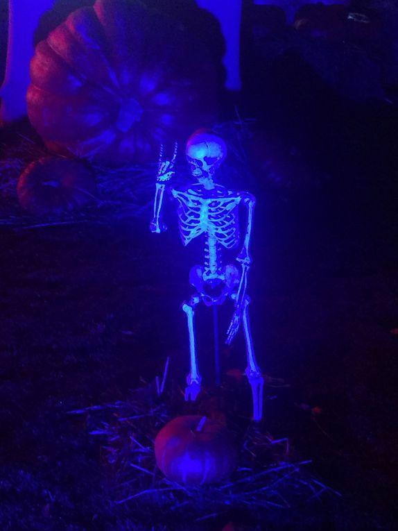 Halloween Night @Bellewaerde
