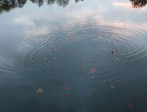 Journée Nature et Art-thérapie: au fil de l'Eau