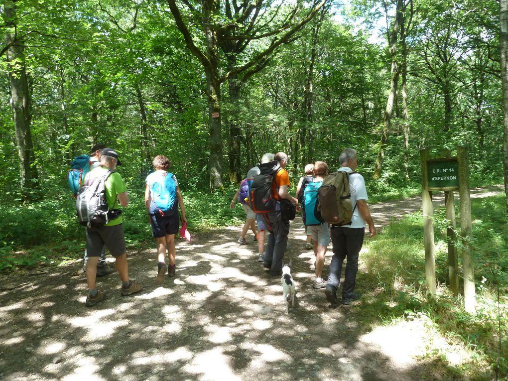 Randonnée en boucle de Dourdan-la-Forêt - 22 km.