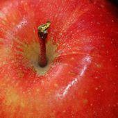 Verrines blanche aux pommes et éclats de nougatine - Les recettes légeres de Chrissy