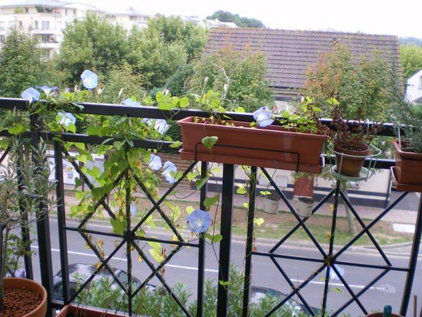 Album - jardin-balcon