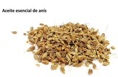 Aceite esencial de anís