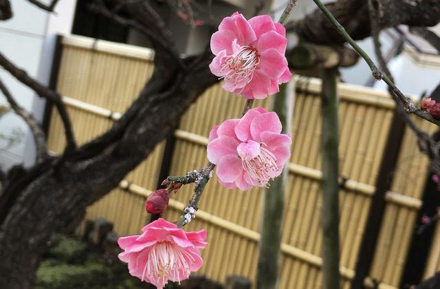 Fukushima : Soirée documentaire sur la vie sur place 5 ans après