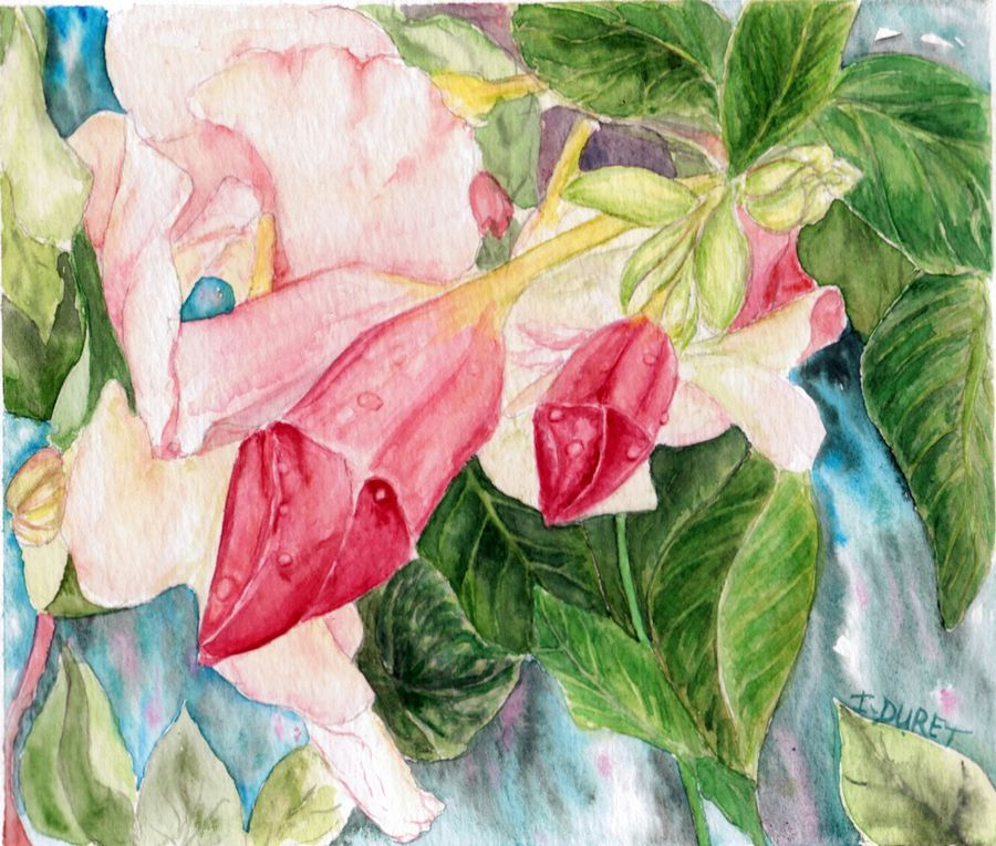 Fleurs du Pacifique