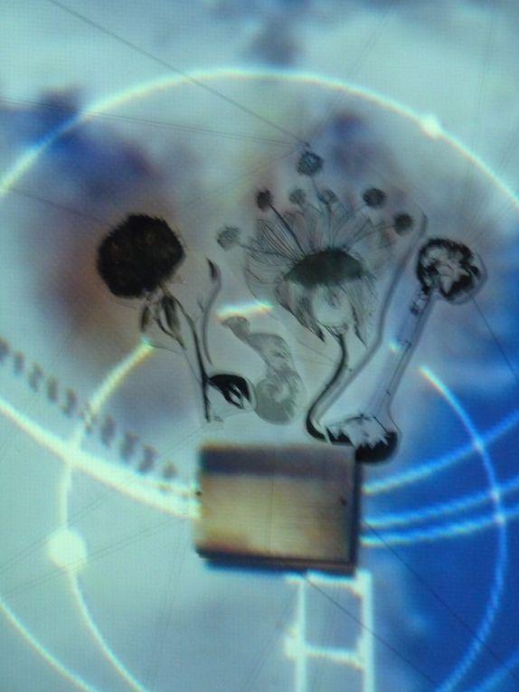 De l'animation vidéo du jardin créé par Prismee  au dessin nu à l'encre de chine de Picchio.