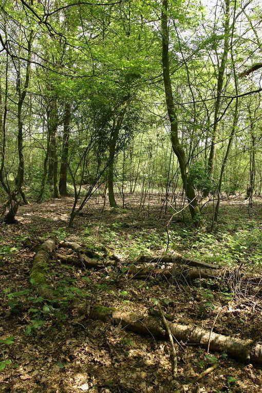 Espaces Naturels Sensibles du Pas-de-Calais, propriétés du Conseil Général ou du Conservatoire du Littoral et gérés par Eden 62.