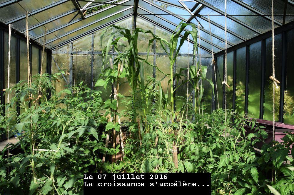 L'histoire du maïs noir du Pérou (morada)