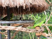 Parque de los aves (Brésil en camping-car)