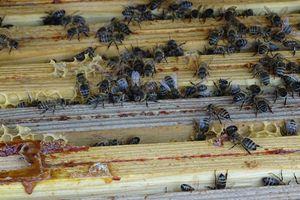 Le journal Le Monde révèle le double discours de 30 députés signataires d'un appel à sauver les abeilles