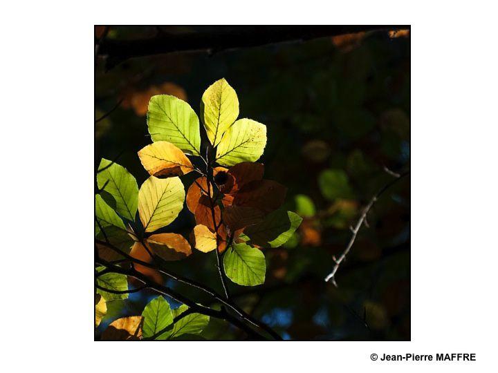 Un environnement sombre met en valeur la beauté d'un arbre dans son décor naturel.