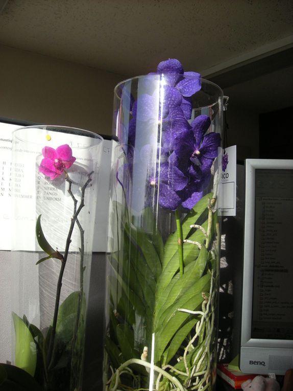 Album - Orchidees-Mes