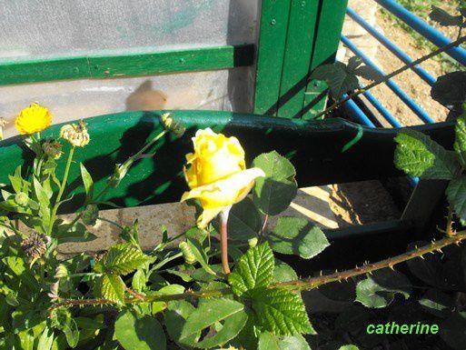 Album - jardin-2009
