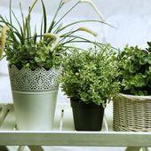 6 Plantes à Faire Pousser Dans Votre Chambre Pour Améliorer Votre Santé.