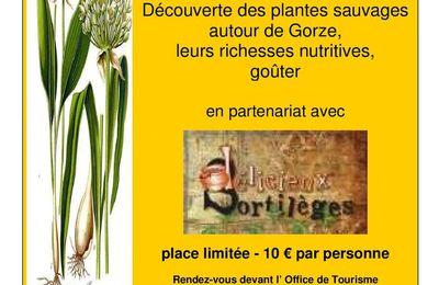 prochaine balade découverte des plantes sauvages à Gorze