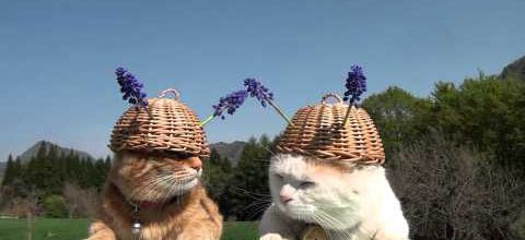 Two cats with helmets