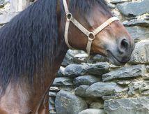 Le cheval du Biros