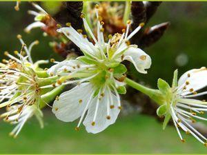 Quelques fleurs dans mon jardin... (6 photos)