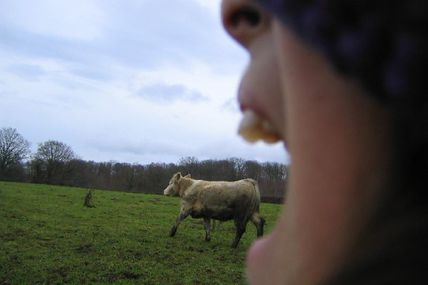 cow in mouth (who's crazy ?)