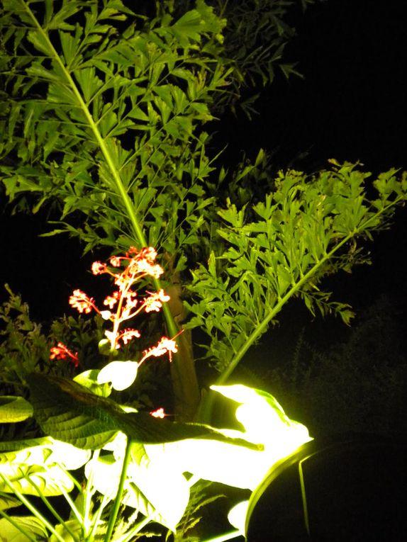 Ambiance nocturne autour du Kan.