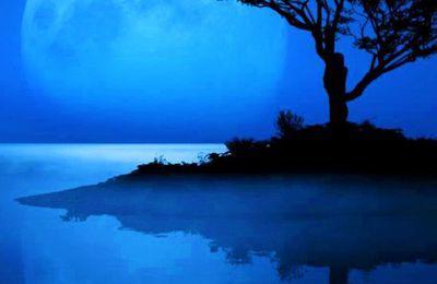 Arbre - Lune - Nuit - Île - Reflet - Photographie - Picture - Free