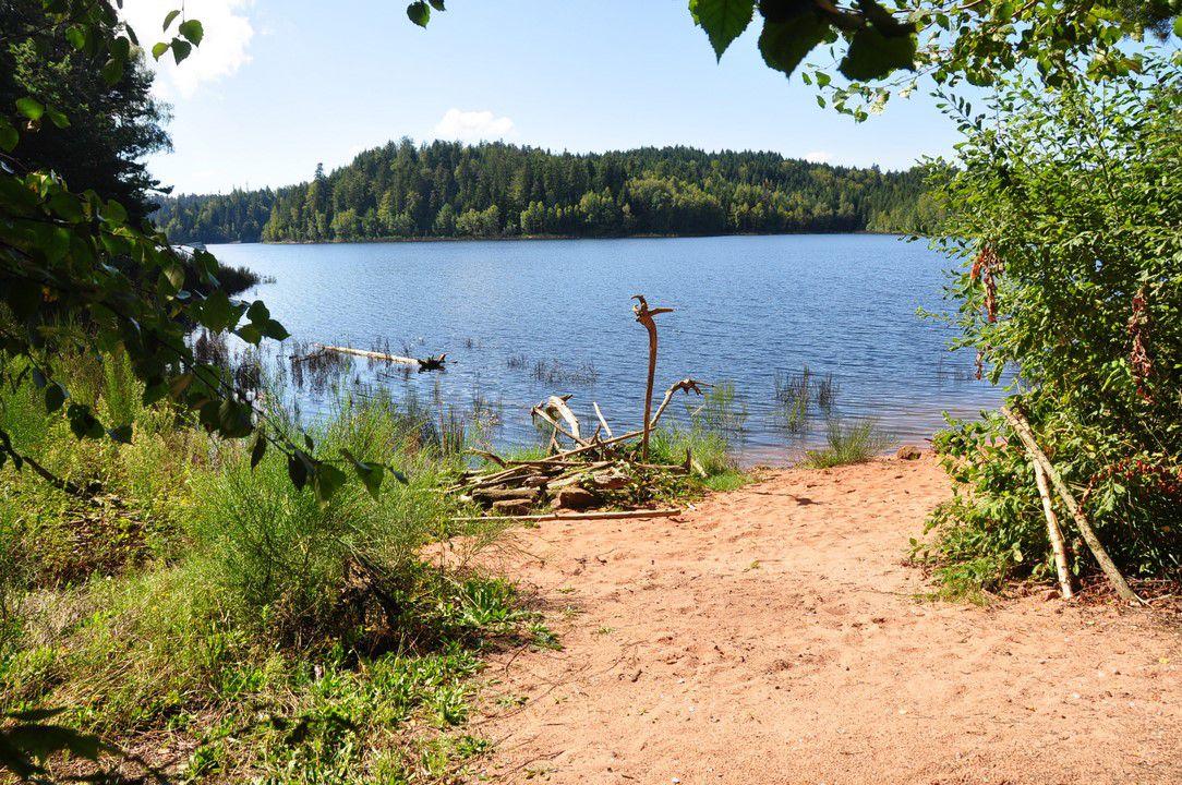 Un petit coin du lac ....