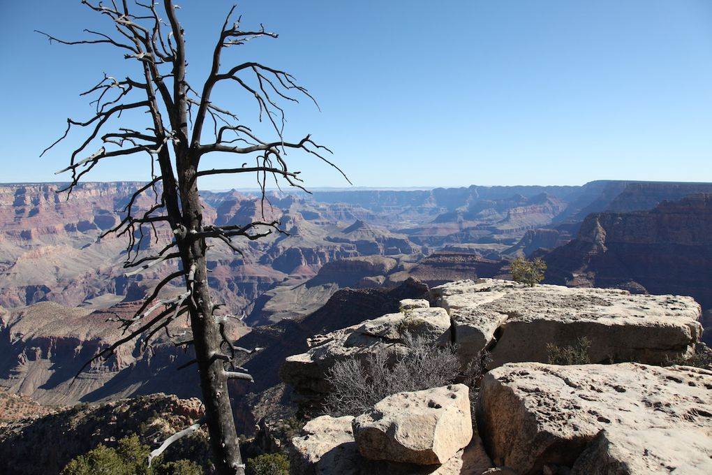 The road trip - Grand Canyon