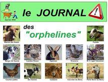 """Journal des races menacées (3) : spécial """"Orphelines"""""""