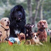 L'Homme a modifié le cerveau des chiens en créant les races