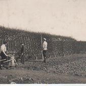 Jardin d'esprit médiéval du lycée agricole de Douai Wagnonville: Le lycée agricole d'antan - les fruitiers et le verger Louis LORETTE