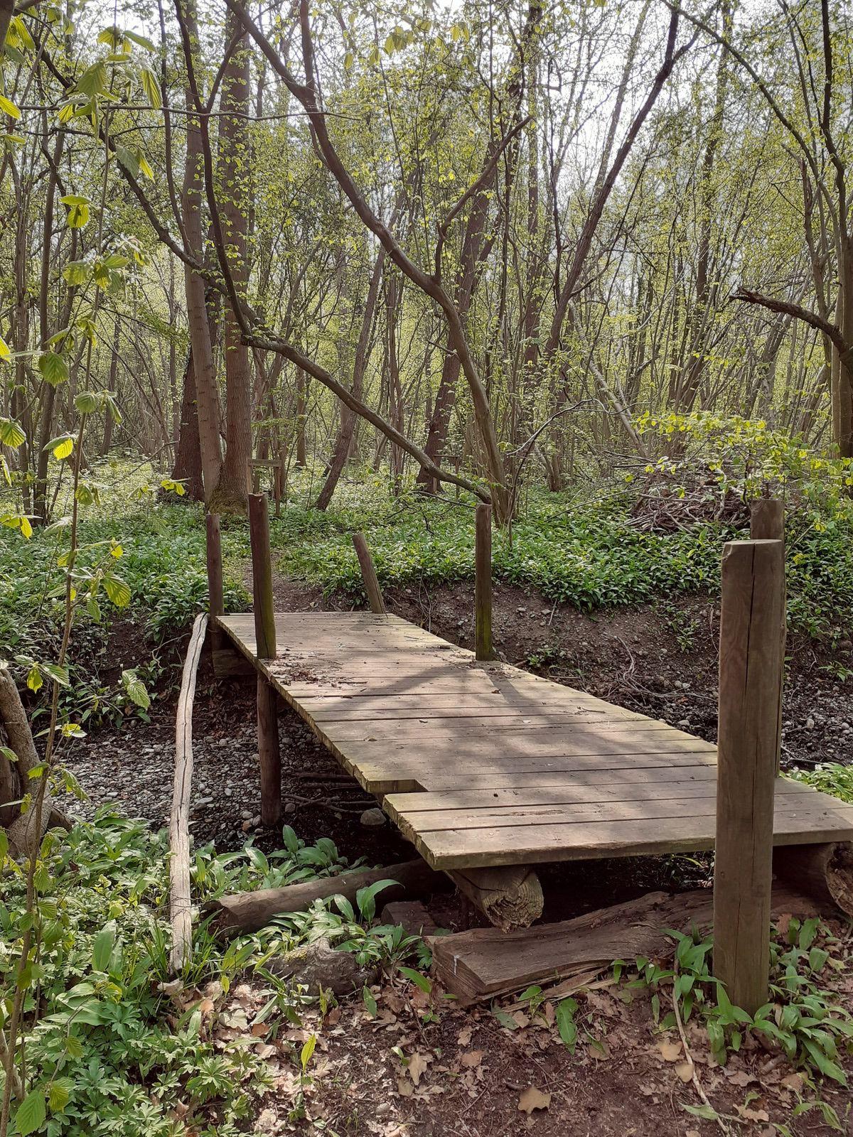 C'était le mercredi 21 avril - randonnée découverte dans la forêt de l'Orch