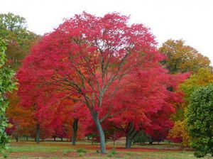 Un arbre remarquable en hommage