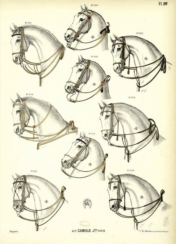 Catalogue Camille Jeune: sellerie, harnais,...