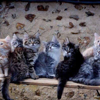 Chatons des Bleuets : que sont ils devenus ? De 2009 à 2010 ( chatons en 'E' et 'F' )