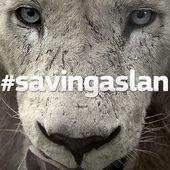 #savingaslan : Voici l'histoire d'un lion que nous avons aidé à récupérer sa capacité à mordre - OOKAWA Corp.