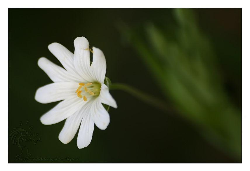Petite sélection de photo de fleurs & plantes diverses