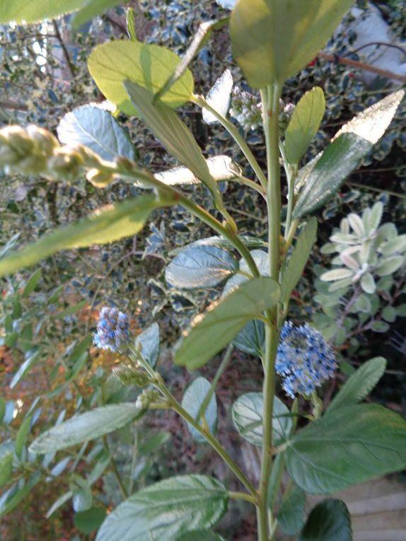 Cette semaine dans mon jardin Le Clos fleuri .....