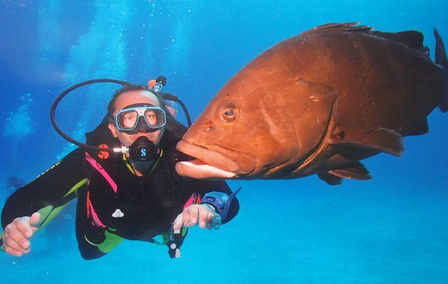 PLONGEE AUX MALDIVES : La fin d'un rêve ou comment ma passion est devenue mon pire cauchemar !