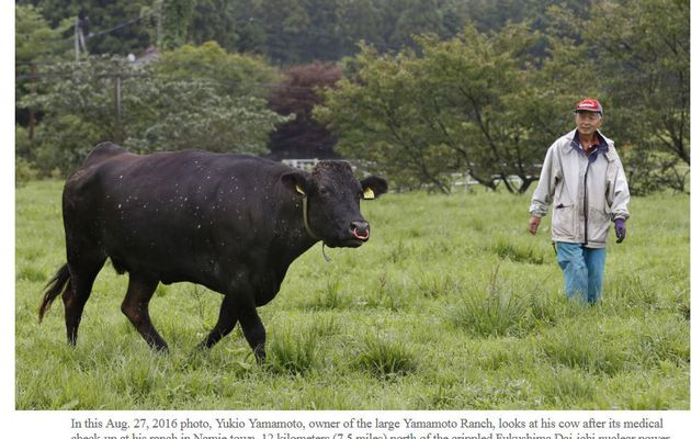 Fukushima cows' new purpose